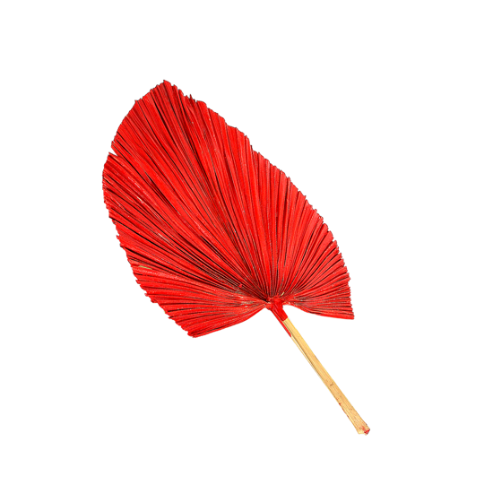 Picture of PLAM  LEAF